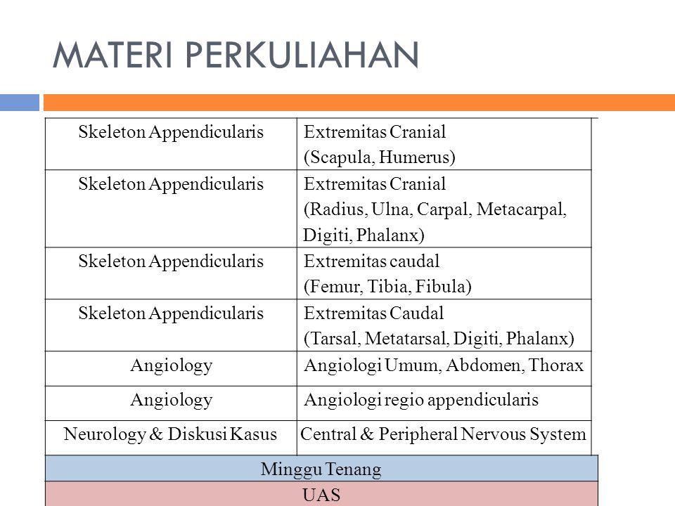 MATERI PERKULIAHAN Skeleton Appendicularis Extremitas Cranial