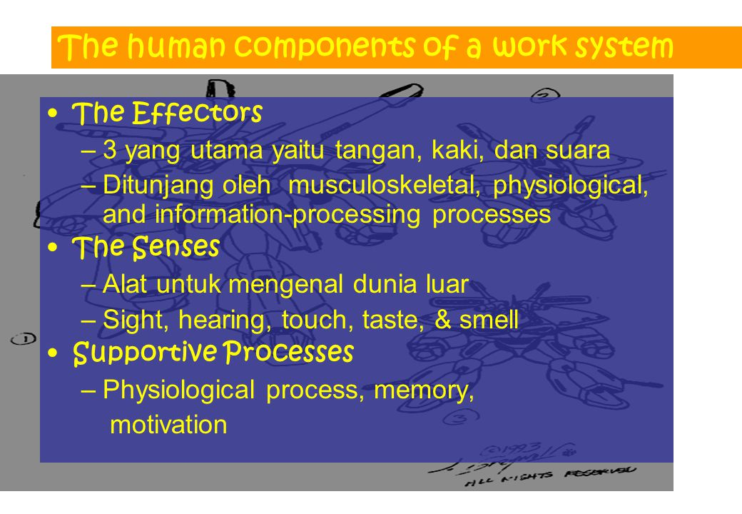 The human components of a work system