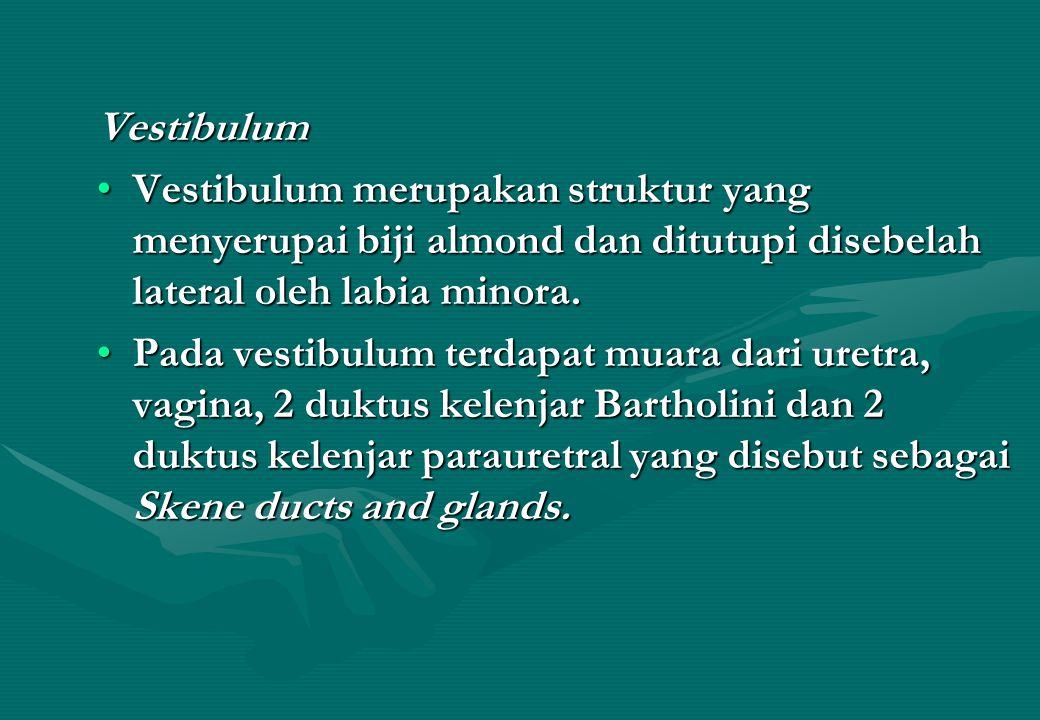 Vestibulum Vestibulum merupakan struktur yang menyerupai biji almond dan ditutupi disebelah lateral oleh labia minora.
