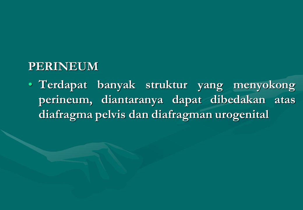 PERINEUM Terdapat banyak struktur yang menyokong perineum, diantaranya dapat dibedakan atas diafragma pelvis dan diafragman urogenital.