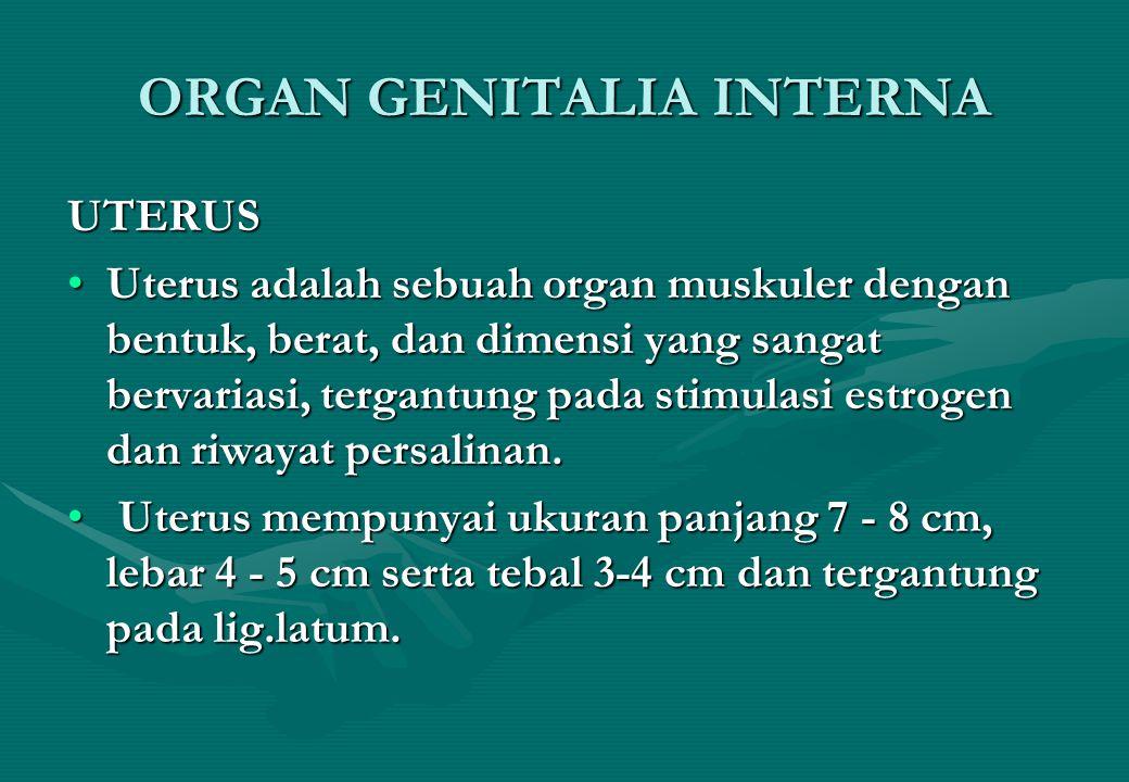 ORGAN GENITALIA INTERNA