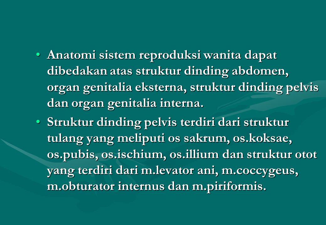 Anatomi sistem reproduksi wanita dapat dibedakan atas struktur dinding abdomen, organ genitalia eksterna, struktur dinding pelvis dan organ genitalia interna.