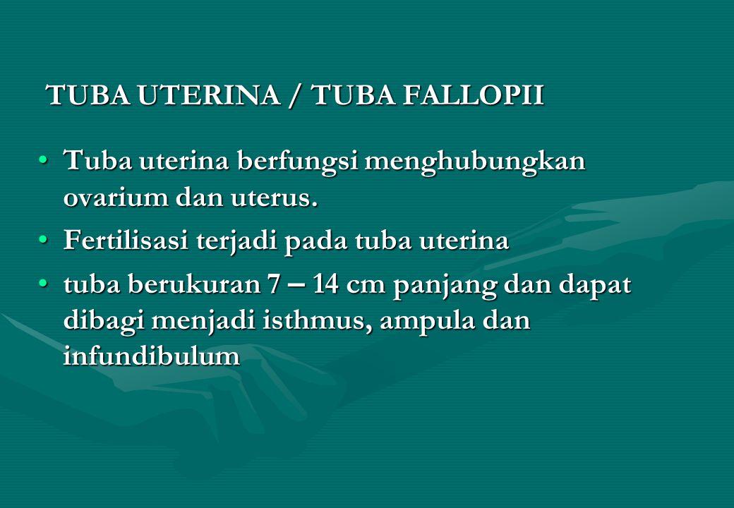 TUBA UTERINA / TUBA FALLOPII