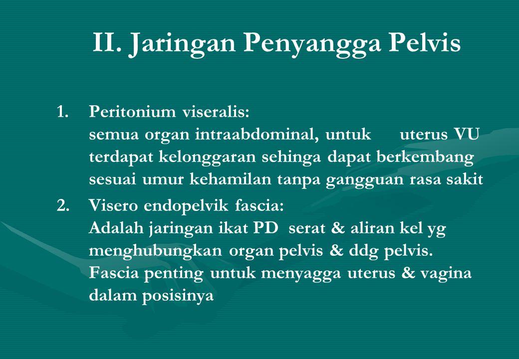 II. Jaringan Penyangga Pelvis