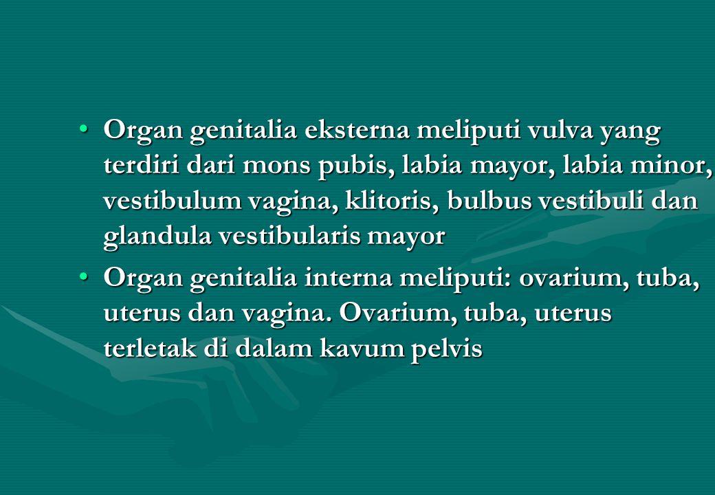Organ genitalia eksterna meliputi vulva yang terdiri dari mons pubis, labia mayor, labia minor, vestibulum vagina, klitoris, bulbus vestibuli dan glandula vestibularis mayor