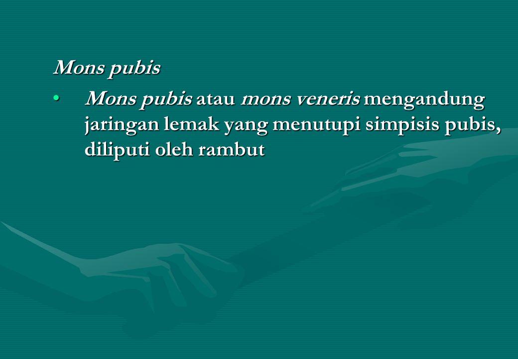 Mons pubis Mons pubis atau mons veneris mengandung jaringan lemak yang menutupi simpisis pubis, diliputi oleh rambut.