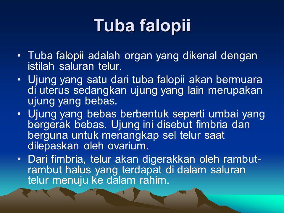 Tuba falopii Tuba falopii adalah organ yang dikenal dengan istilah saluran telur.