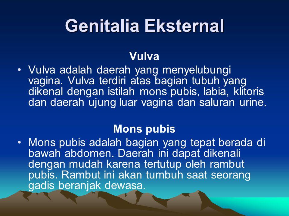 Genitalia Eksternal Vulva