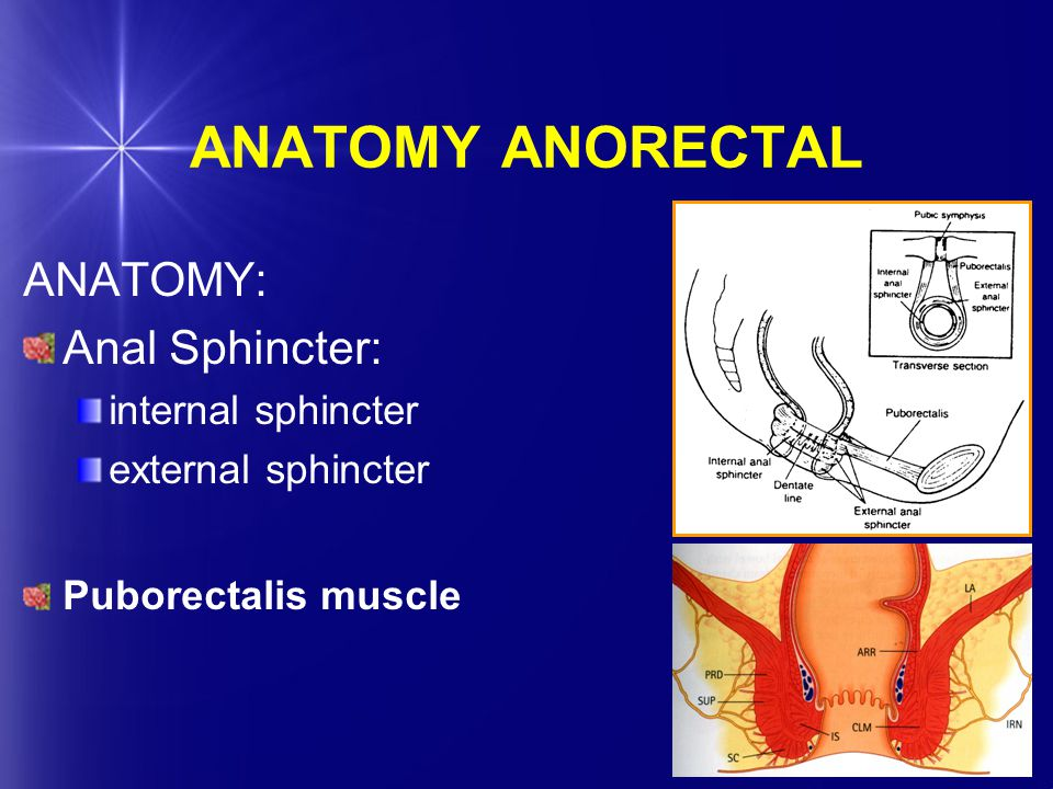 ANATOMY ANORECTAL ANATOMY: Anal Sphincter: internal sphincter