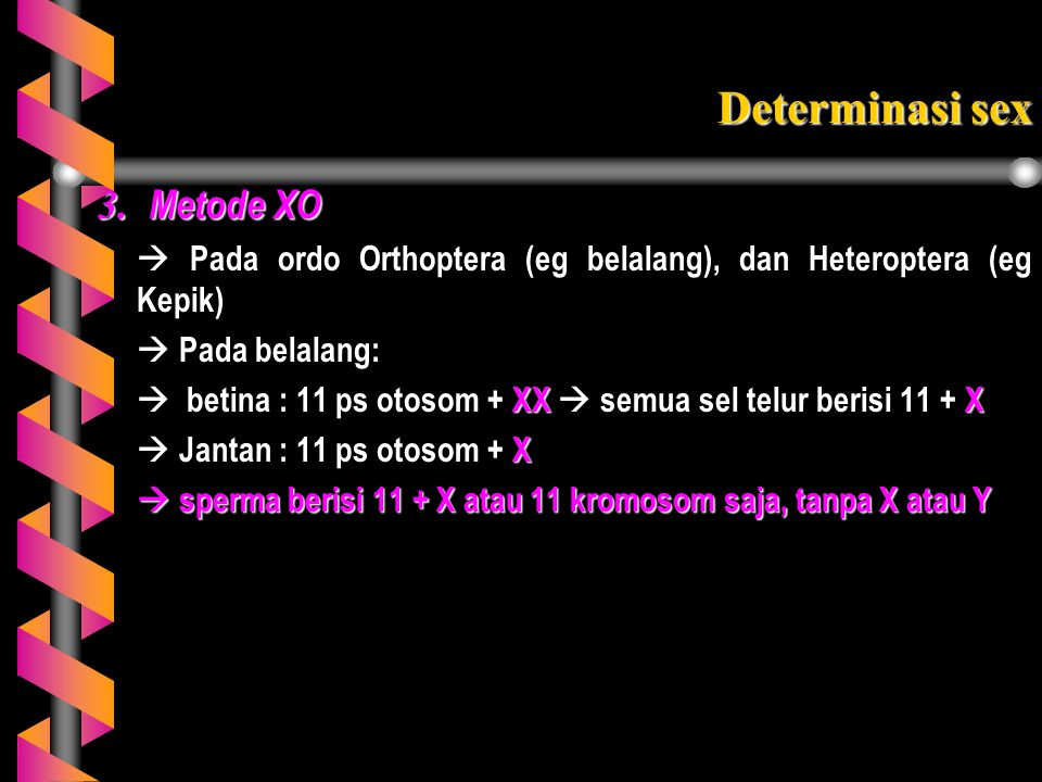 Determinasi sex 3. Metode XO