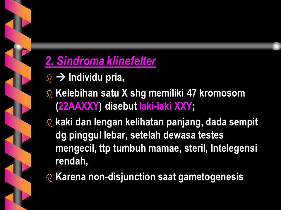 2. Sindroma klinefelter  Individu pria,