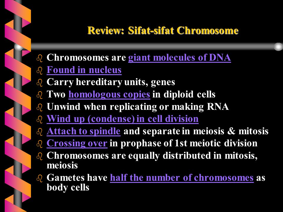 Review: Sifat-sifat Chromosome