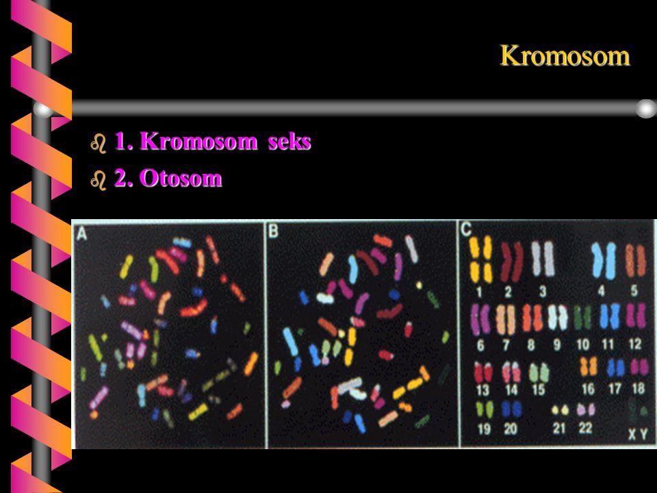 Kromosom 1. Kromosom seks 2. Otosom