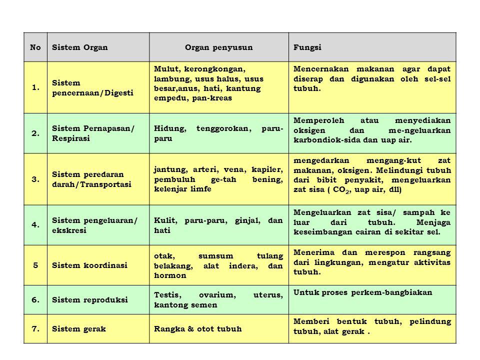 No Sistem Organ. Organ penyusun. Fungsi. 1. Sistem pencernaan/Digesti.
