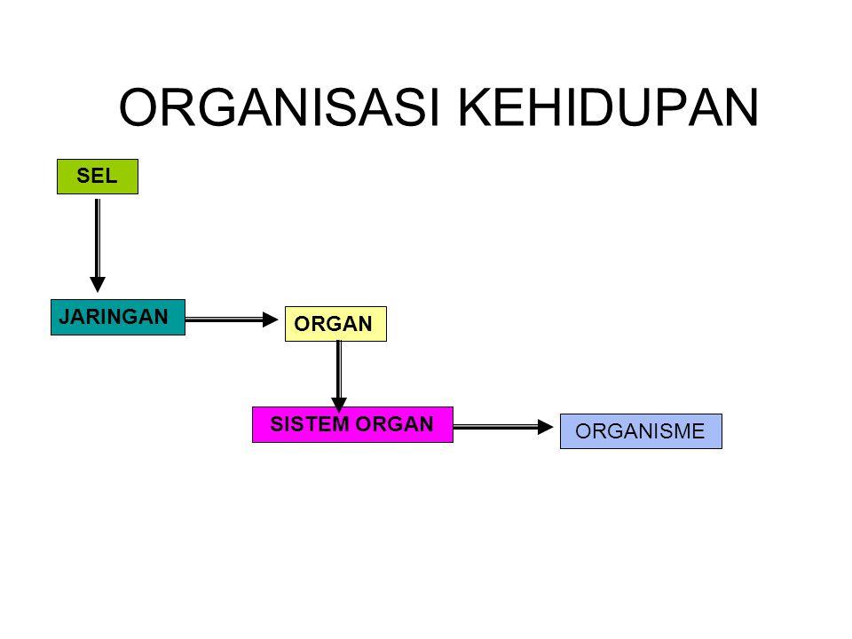 ORGANISASI KEHIDUPAN SEL JARINGAN ORGAN SISTEM ORGAN ORGANISME