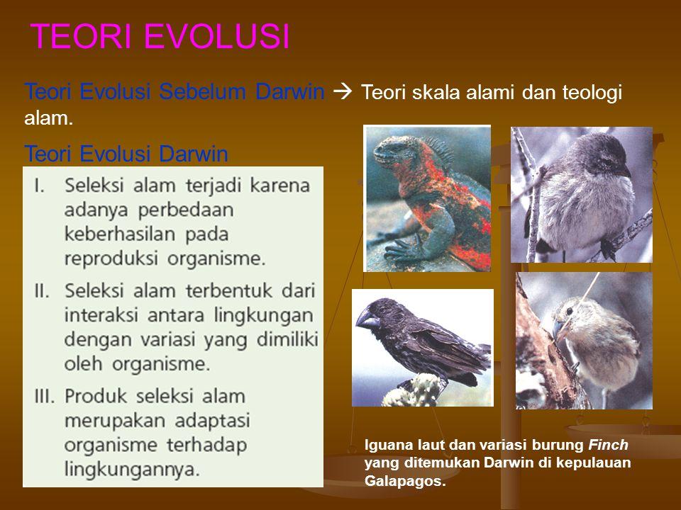 TEORI EVOLUSI Teori Evolusi Sebelum Darwin  Teori skala alami dan teologi alam. Teori Evolusi Darwin.