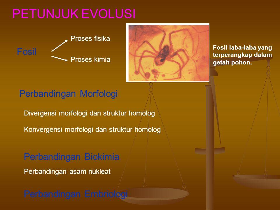PETUNJUK EVOLUSI Fosil Perbandingan Morfologi Perbandingan Biokimia