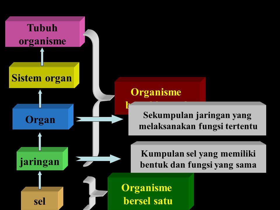Tubuh organisme Sistem organ Organisme bersel banyak Organ jaringan