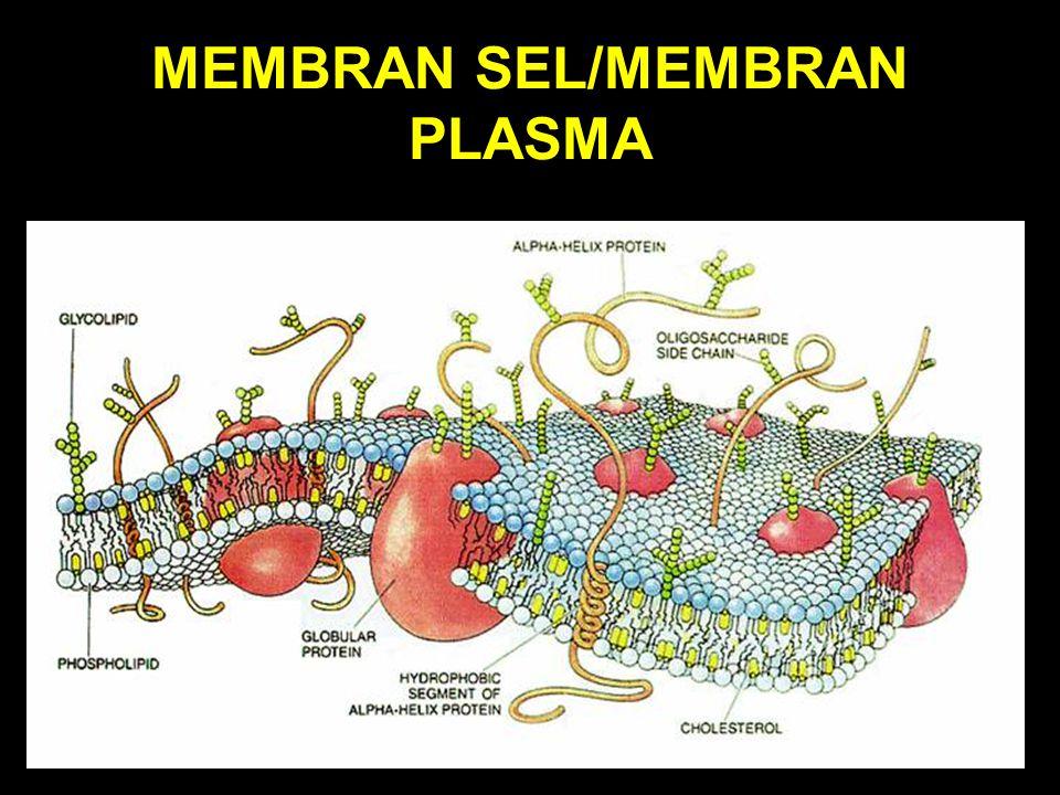 MEMBRAN SEL/MEMBRAN PLASMA