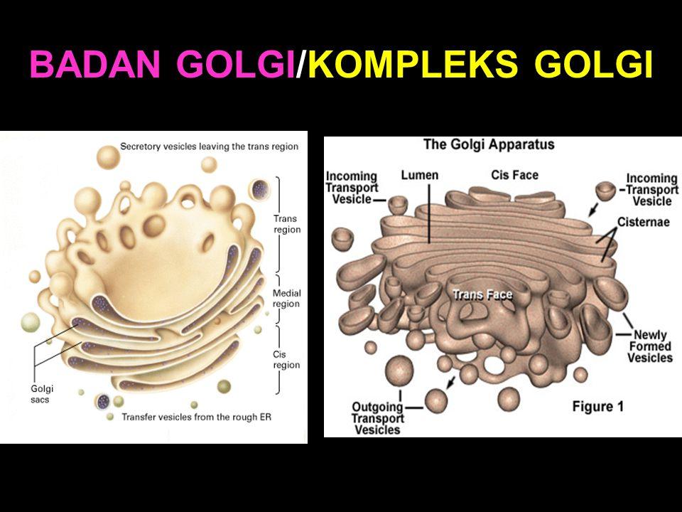 BADAN GOLGI/KOMPLEKS GOLGI