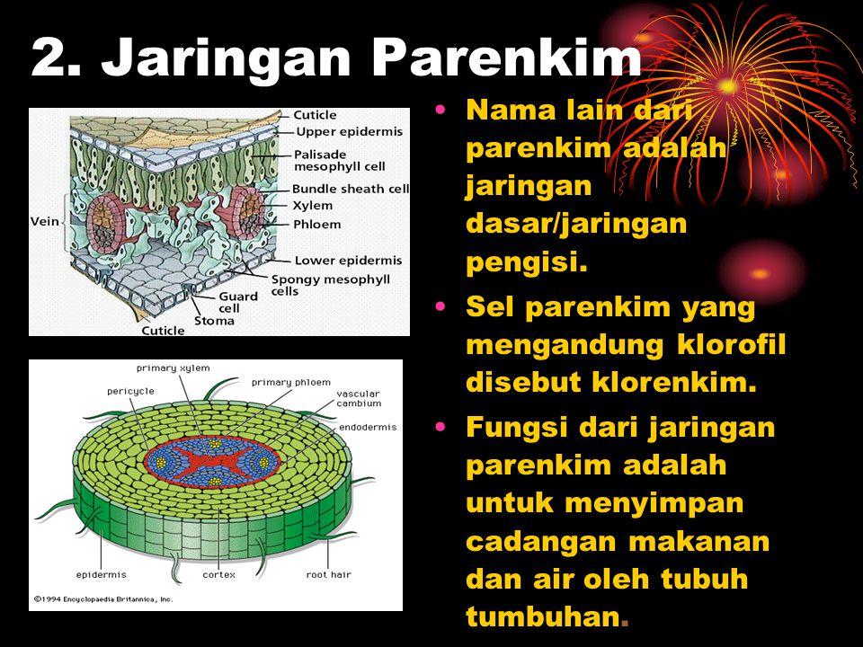 2. Jaringan Parenkim Nama lain dari parenkim adalah jaringan dasar/jaringan pengisi. Sel parenkim yang mengandung klorofil disebut klorenkim.