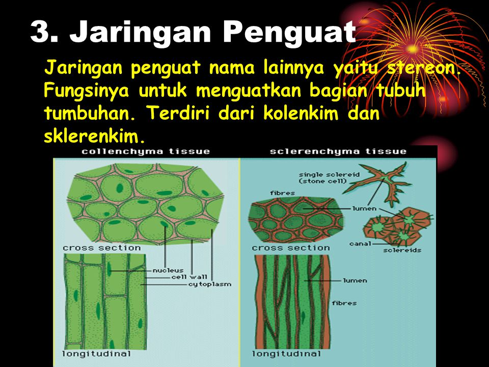 3. Jaringan Penguat