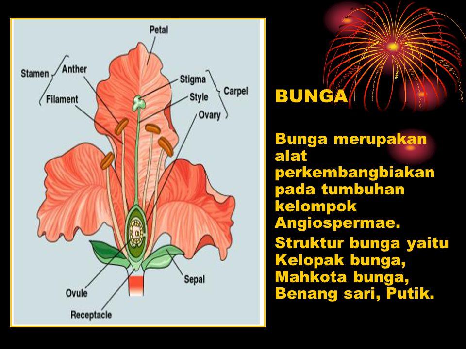 BUNGA Bunga merupakan alat perkembangbiakan pada tumbuhan kelompok Angiospermae.