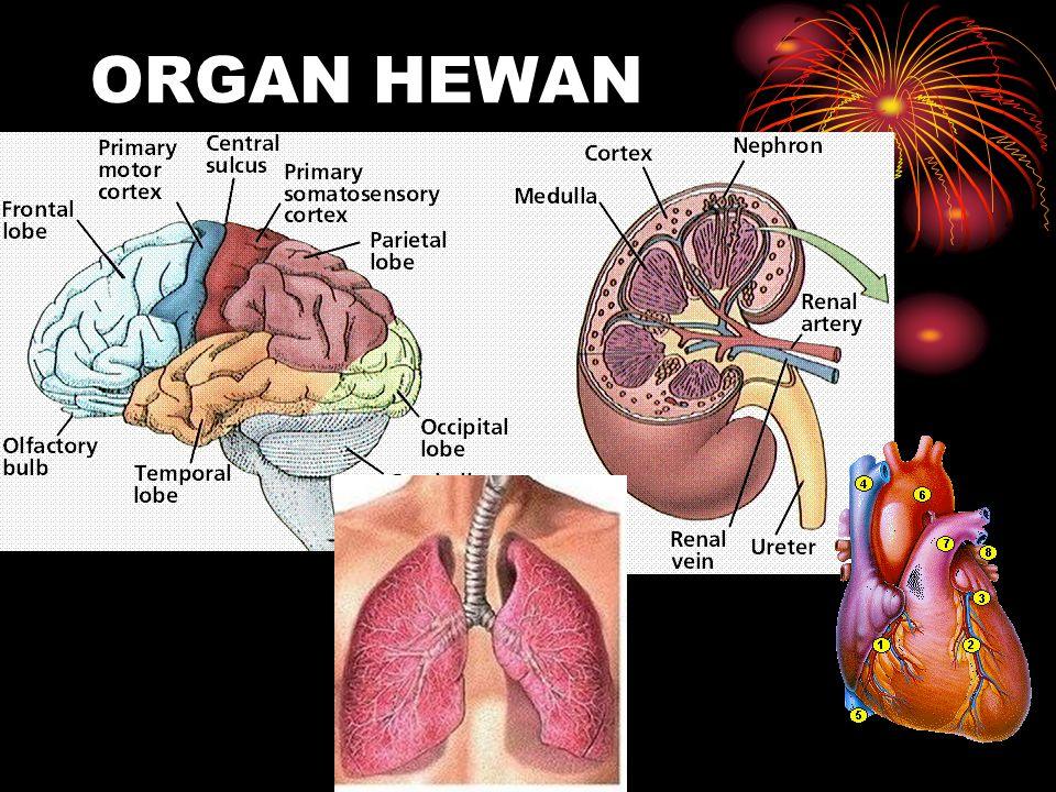 ORGAN HEWAN