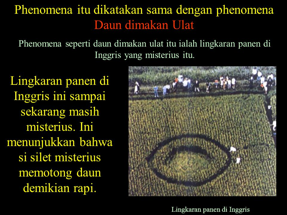 Phenomena itu dikatakan sama dengan phenomena Daun dimakan Ulat