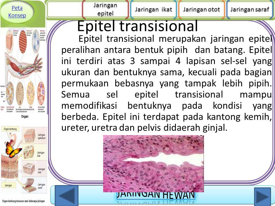 Peta Konsep Jaringan epitel. Jaringan ikat. Jaringan otot. Jaringan saraf. Epitel transisional.