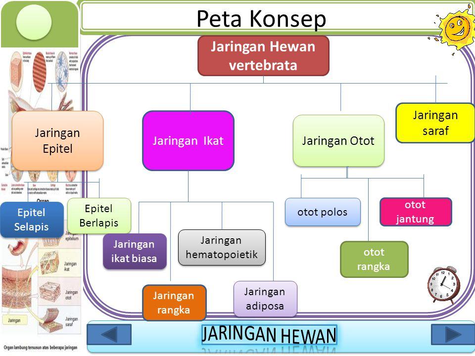 Jaringan Hewan vertebrata