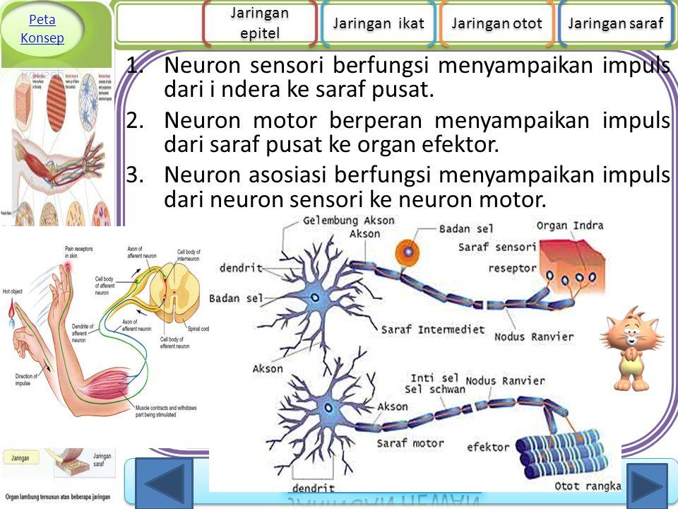 Peta Konsep Jaringan epitel. Jaringan ikat. Jaringan otot. Jaringan saraf.