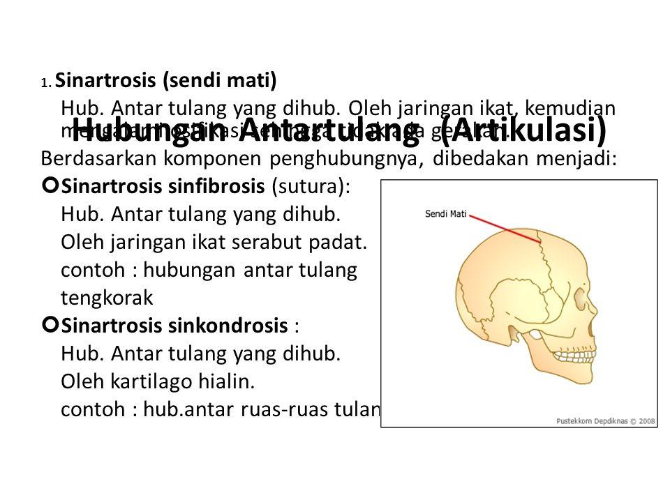 Hubungan Antartulang (Artikulasi)
