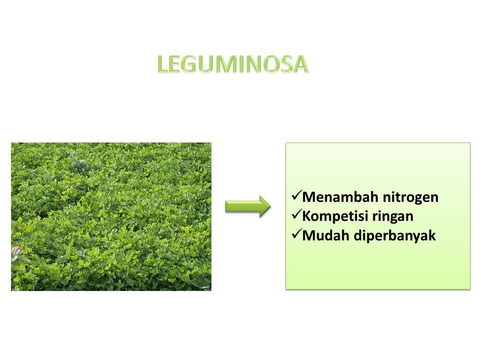 LEGUMINOSA Menambah nitrogen Kompetisi ringan Mudah diperbanyak