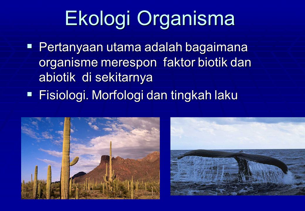Ekologi Organisma Pertanyaan utama adalah bagaimana organisme merespon faktor biotik dan abiotik di sekitarnya.