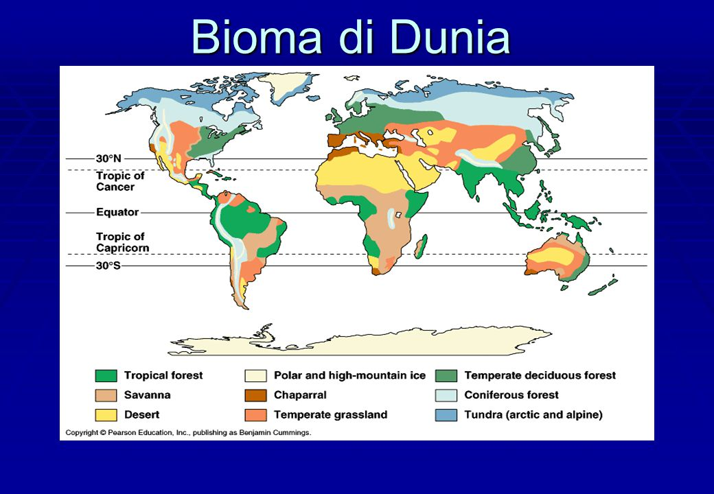 Bioma di Dunia Broad patterns – temperature, latitude