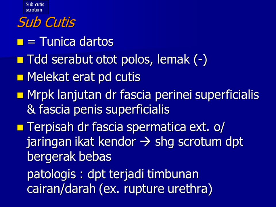 Sub Cutis = Tunica dartos Tdd serabut otot polos, lemak (-)