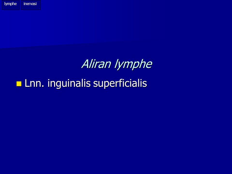 lymphe inervasi Aliran lymphe Lnn. inguinalis superficialis