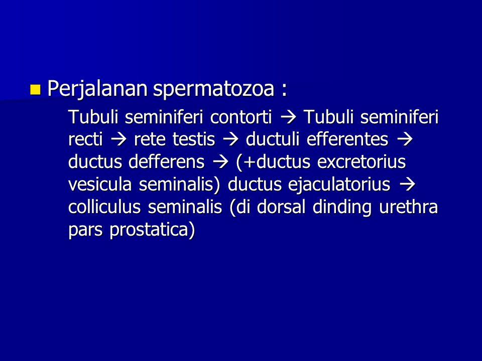 Perjalanan spermatozoa :