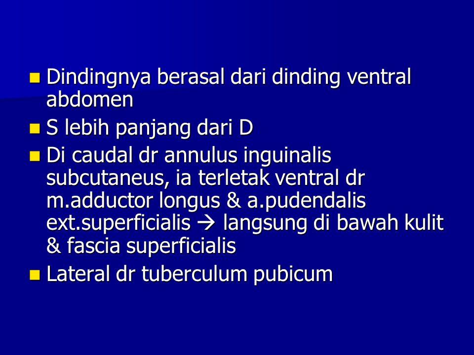 Dindingnya berasal dari dinding ventral abdomen