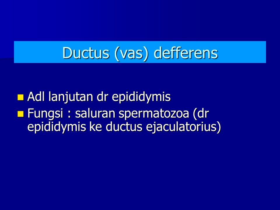 Ductus (vas) defferens