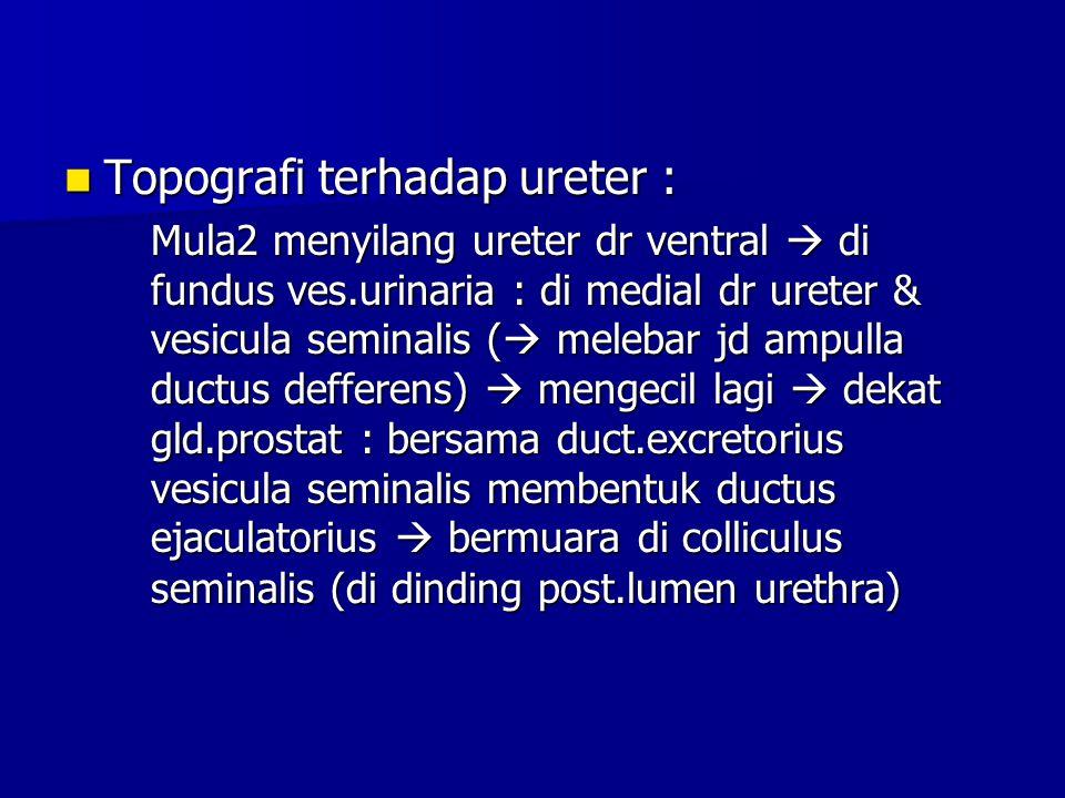 Topografi terhadap ureter :