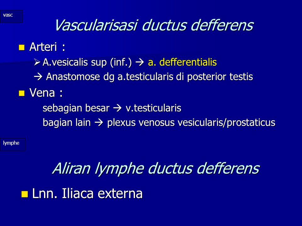Vascularisasi ductus defferens