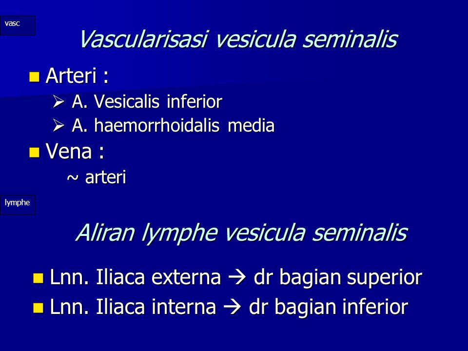 Vascularisasi vesicula seminalis
