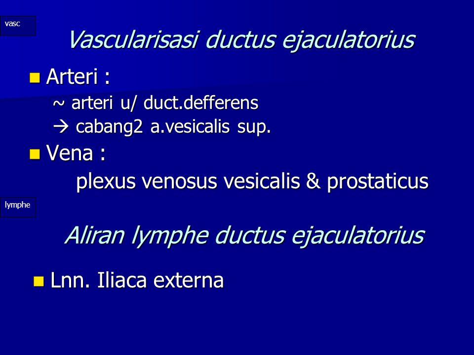 Vascularisasi ductus ejaculatorius