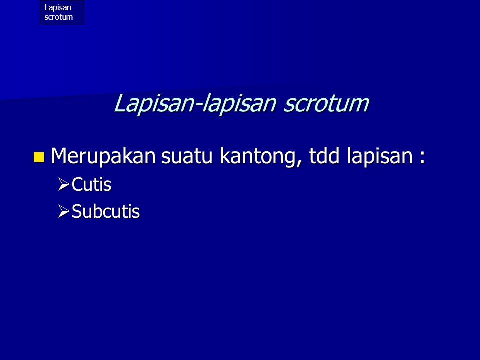 Lapisan-lapisan scrotum
