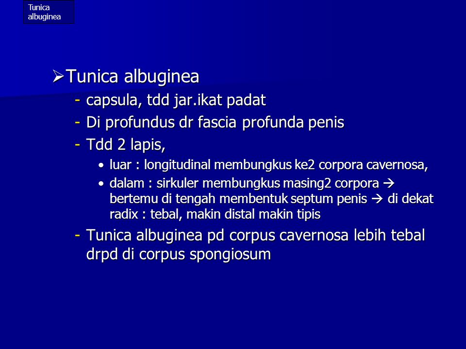 Tunica albuginea capsula, tdd jar.ikat padat