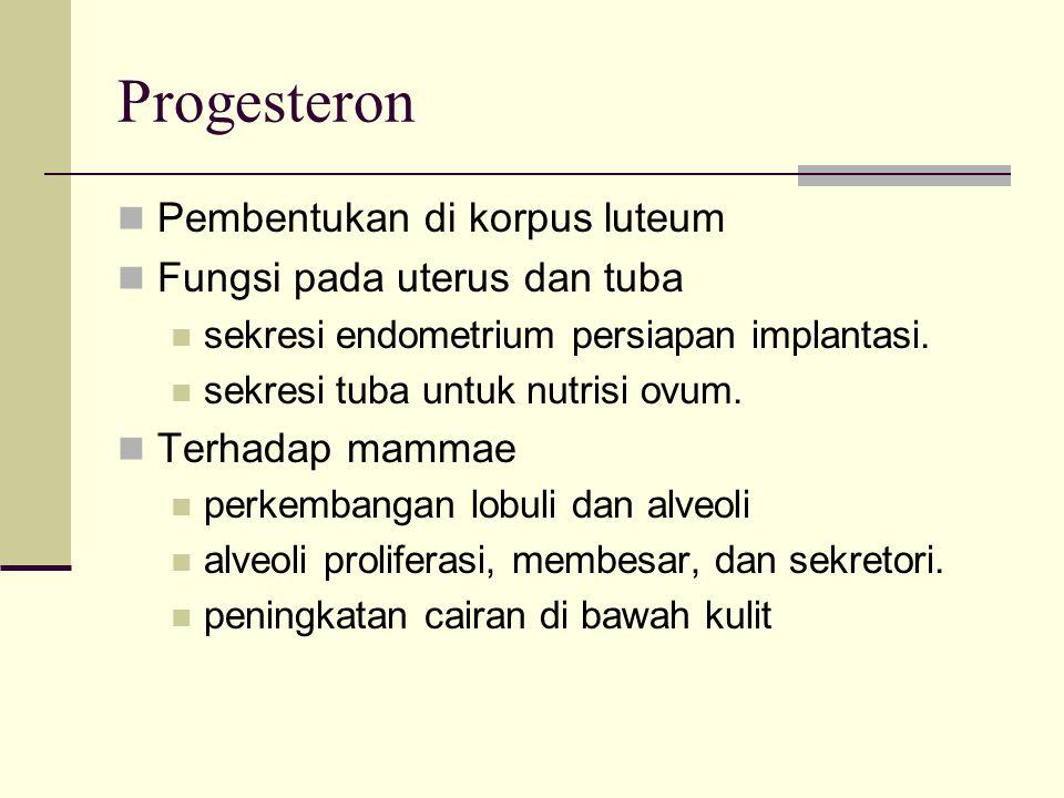 Progesteron Pembentukan di korpus luteum Fungsi pada uterus dan tuba