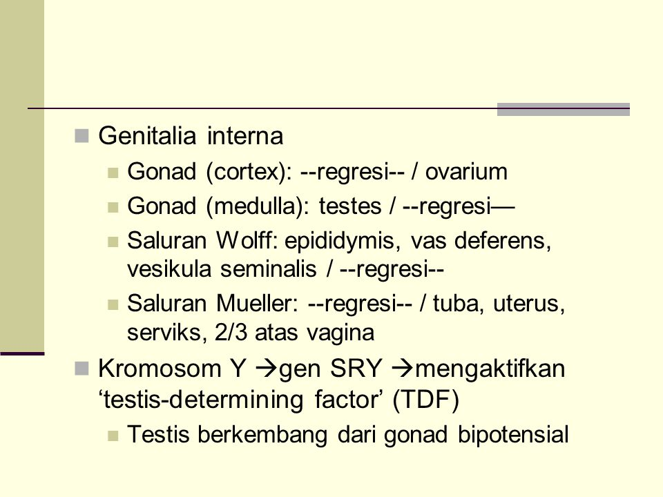 Kromosom Y gen SRY mengaktifkan 'testis-determining factor' (TDF)