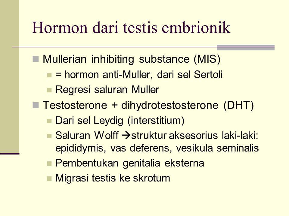 Hormon dari testis embrionik